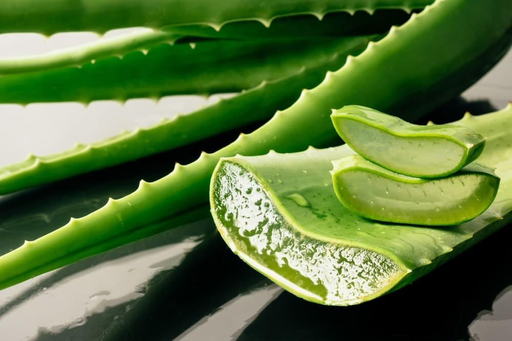 Aloe Vera this miraculous plant with many virtues